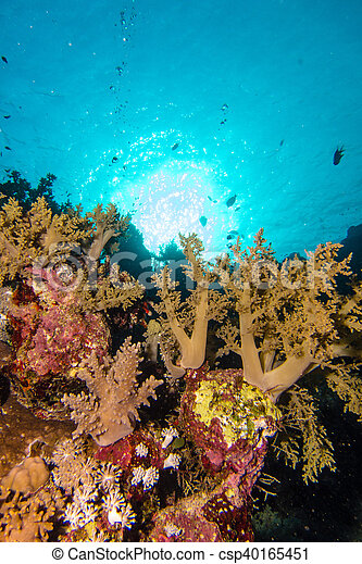 Sun in the coral garden - csp40165451