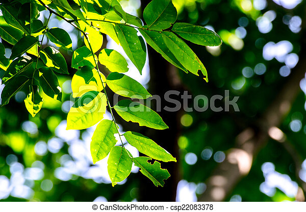 Sun in the forest. - csp22083378