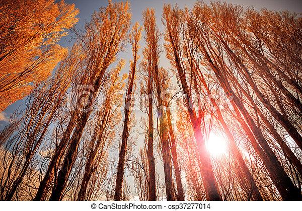sun light behind dry tree branch ,te anau lake fjordland national park south island new zealand - csp37277014