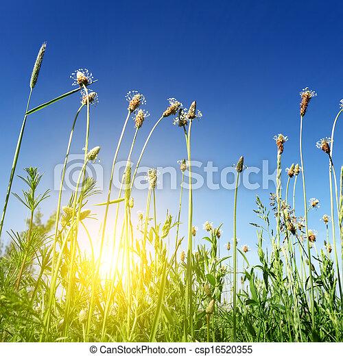 sun light in green spring grass - csp16520355