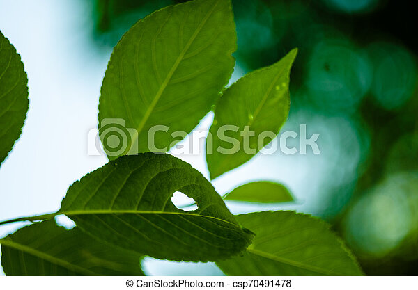 Sun light through the foliage in soft selective focus against background of blurry foliage and blue sky. Close up funny muzzle animal hare or cat from branch with green leaves. Place for your text - csp70491478