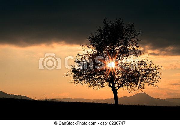 sun over the tree - csp16236747