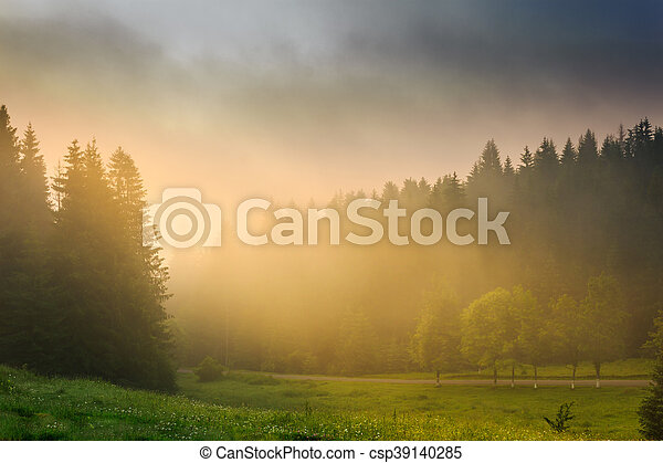 sun rays breaking through the clouds and fog in forests - csp39140285