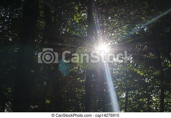 Sun Rays in the Forest - csp14276910