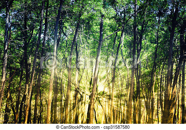 Sun rays in the forest - csp31587580