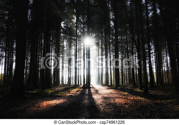 sun rays in the forest - csp74961226