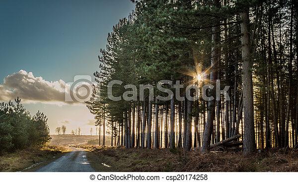 Sun Rays Through the Trees - csp20174258