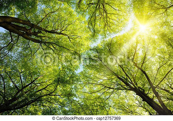 Sun shining through treetops - csp12757369