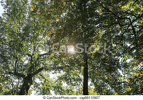 Sun through autumn foliage in the park - csp89110907