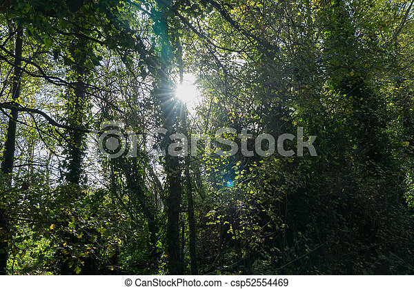 sun through the trees - csp52554469