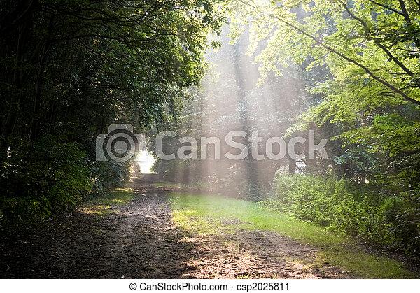 Sunbeams on summer morning - csp2025811