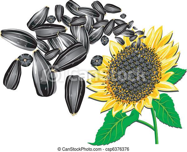 black desert how to get sunflower seeds