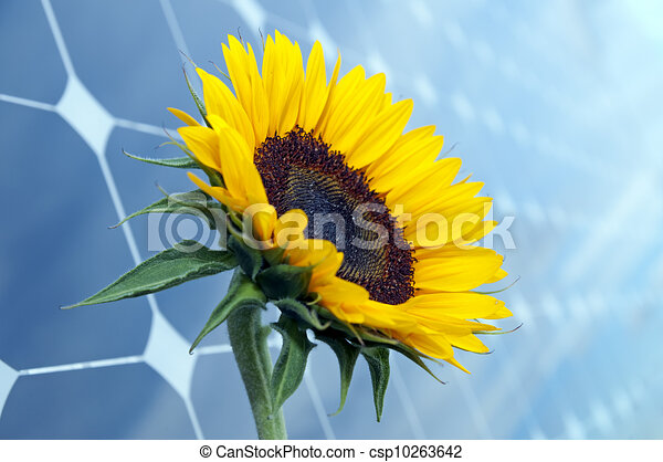 Sunflower Line Drawing : Sunflower and solar panels with sunshine. drawing