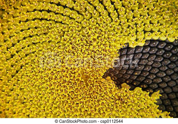 Sunflower background - csp0112544