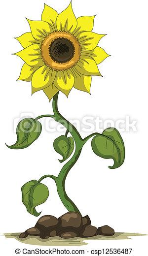 Vector illustration of sunflower.