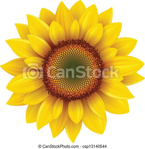 Sunflower - csp13140544