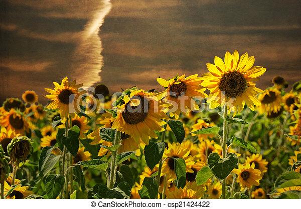 Sunflower Field At Sunset Stock Illustration