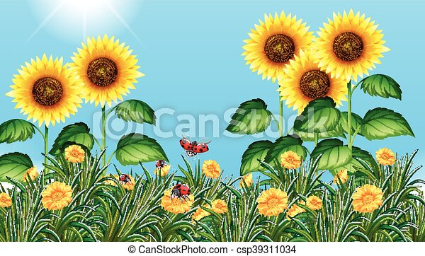 Sunflower Line Drawing : Sunflower field with ladybugs flying illustration vectors search