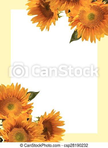 sunflower invitation sunflower helianthus annuus invitation