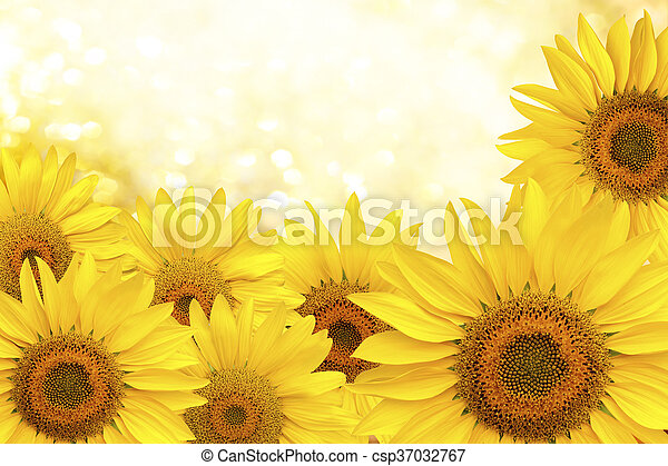 Sunflower natural background - csp37032767