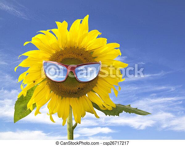 sunflower - csp26717217