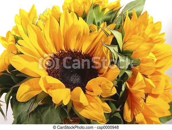 Sunflower - csp0000948