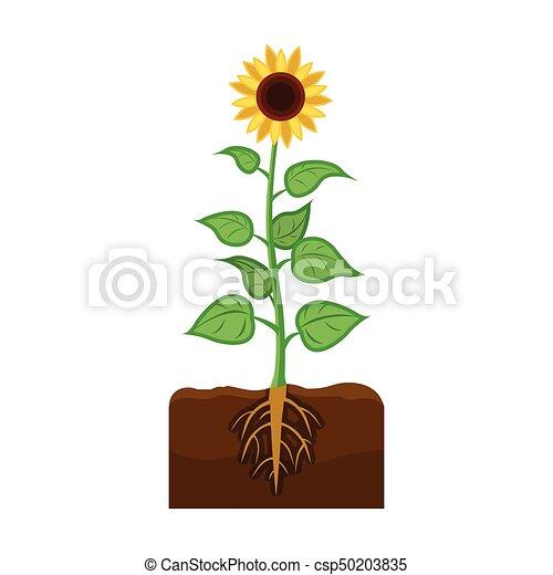 sunflower single icon in cartoon style sunflower vector vectors rh canstockphoto com sunflower vector freepik sunflower vector free download
