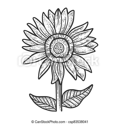 sunflower sketch engraving vector illustration. T-shirt apparel print design. Scratch board imitation. Black and white hand drawn image. - csp83538041