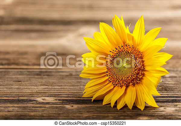 Sunflower On Rustic Wooden Background