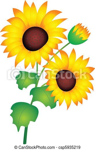 sunflower vector sunflower isolated on white background eps rh canstockphoto com sunflower vector free download sunflower vector clip art