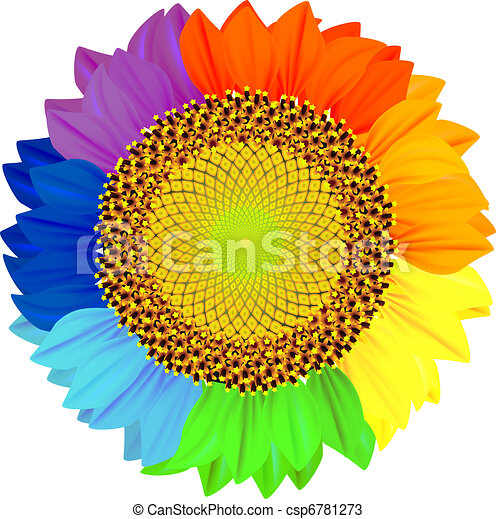 Sunflower with petals of different colors of the rainbow. - csp6781273