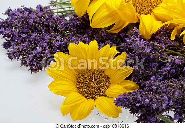 Sunflowers and Lavender isolated on white background - csp10813616