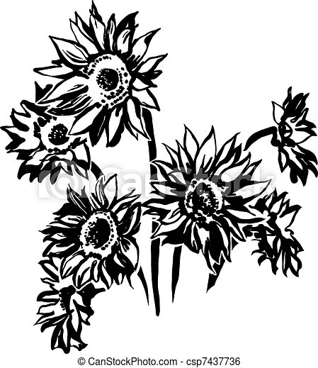 Sunflowers Black And White Picture Of Nature