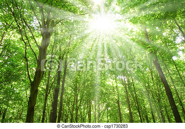 sunlight in trees of forest - csp1730283