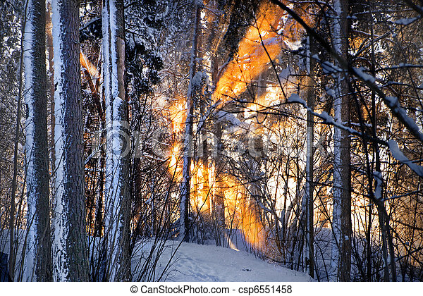 Sunlight in winter forest - csp6551458
