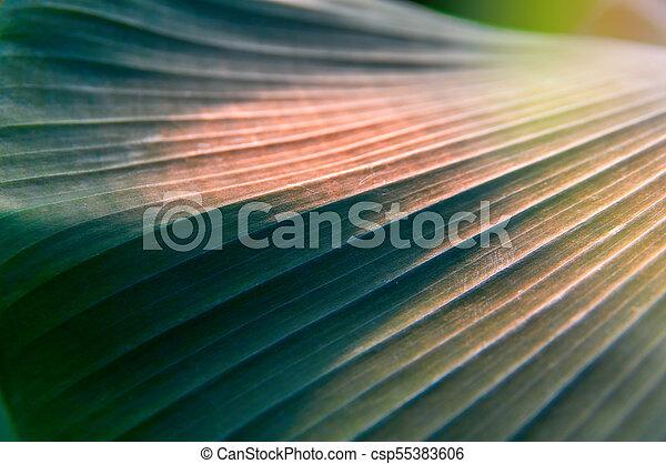 Sunlight on dark leaves palm. Summer vegetative background, selective focus. For cover magazine, advertising. - csp55383606