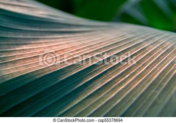 Sunlight on surface dark leaves palm. Summer vegetative background, selective focus. For cover magazine, poster, advertising. - csp55378694