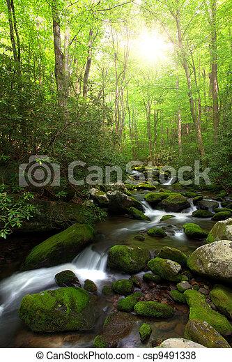 Sunlight over creek - csp9491338
