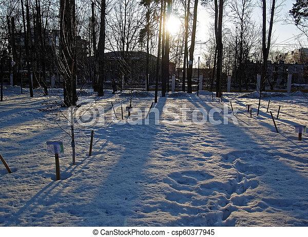 sunlight through the trees in winter - csp60377945
