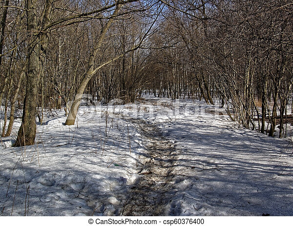 sunlight through the trees in winter - csp60376400