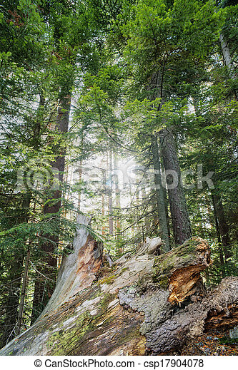 Sunlight through the trees - csp17904078