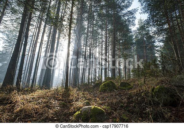 Sunlight through the trees - csp17907716