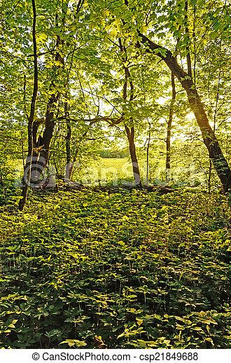 Sunlight through the trees - csp21849688