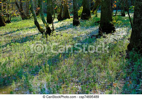Sunlight Through the Trees - csp74695489