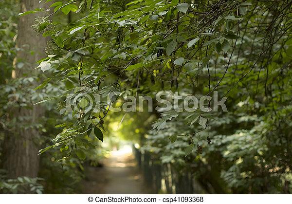 Sunlight through the trees - csp41093368