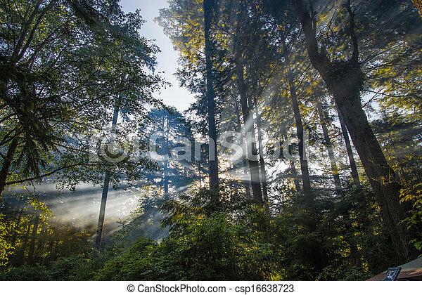 Sunlight Through The Trees - csp16638723