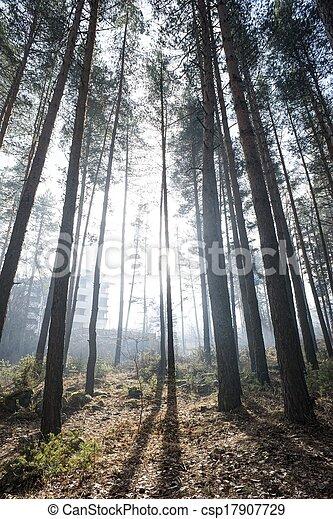 Sunlight through the trees - csp17907729