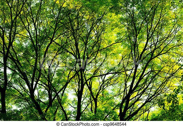 Sunlight through the trees - csp9648544