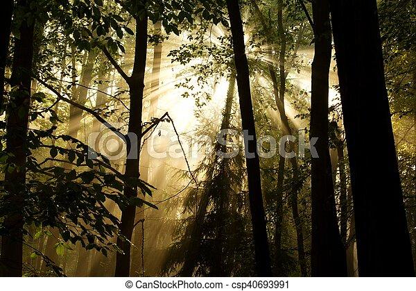 sunlight through the trees - csp40693991