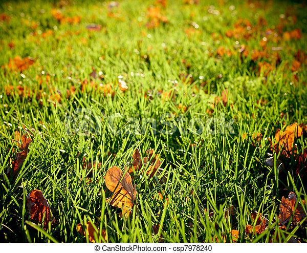 Sunlit autumn meadow - csp7978240